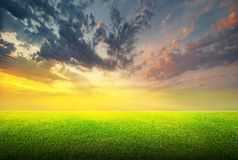 Feld des grünen Grases und des Himmels Stockfoto