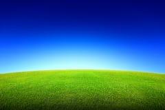 Feld des grünen Grases und des Himmels Stockbild