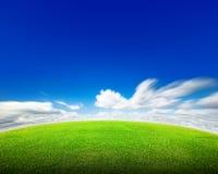 Feld des grünen Grases und des Himmels Stockbilder