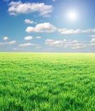 Feld des grünen Grases und des stürmischen Himmels Stockfotos