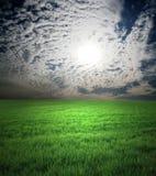 Feld des grünen Grases und des stürmischen Himmels Lizenzfreie Stockfotos