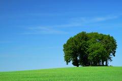 Feld des grünen Grases und ein Bündel Bäume Stockbild