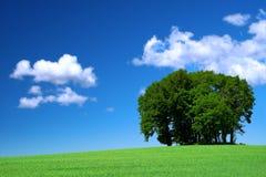 Feld des grünen Grases und ein Bündel Bäume Lizenzfreie Stockbilder
