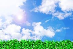 Feld des grünen Grases und schöner Himmel Stockbilder