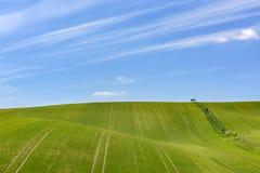 Feld des grünen Kornes und des bewölkten blauen Himmels Stockbild