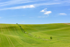 Feld des grünen Kornes und des bewölkten blauen Himmels Lizenzfreies Stockbild