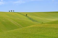 Feld des grünen Kornes und des bewölkten blauen Himmels Stockfoto