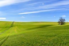 Feld des grünen Kornes und des bewölkten blauen Himmels Lizenzfreie Stockbilder