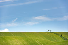 Feld des grünen Kornes und des bewölkten blauen Himmels Stockbilder