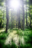 Feld des Grüns Lizenzfreie Stockfotografie