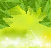 Feld des Grüns verlässt auf einem grünen Hintergrund Lizenzfreies Stockbild