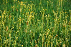 Feld des Grases Stockbild