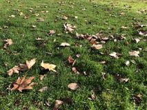 Feld des Grases und der Blätter lizenzfreie stockfotografie