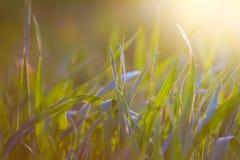 Feld des Grases und der Blumen unter blauem Himmel Lizenzfreie Stockfotos