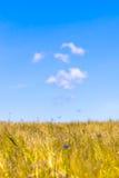 Feld des Grases und der Blumen unter blauem Himmel Lizenzfreies Stockbild