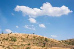Feld des Grases und der Blumen unter blauem Himmel Stockbilder