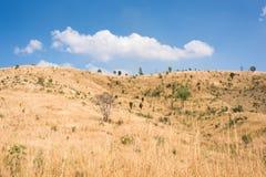 Feld des Grases und der Blumen unter blauem Himmel Lizenzfreie Stockfotografie