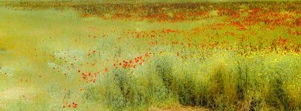 Feld des Grases und der Blumen unter blauem Himmel stockfoto