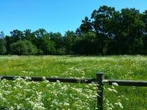 Feld des Grases und der Blumen unter blauem Himmel Stockbild