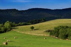 Feld des Grases und der Blumen unter blauem Himmel Lizenzfreies Stockfoto