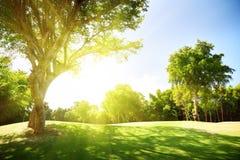 Feld des Grases und der Bäume Stockfoto