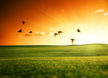 Feld des Grases und der Vögel Stockfotos