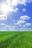 Feld des Grases und des blauen Himmels Stockfoto