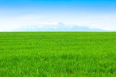 Feld des Grases und des vollkommenen blauen Himmels Lizenzfreie Stockfotografie