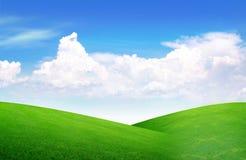 Feld des Grases und des vollkommenen Himmels Lizenzfreie Stockbilder