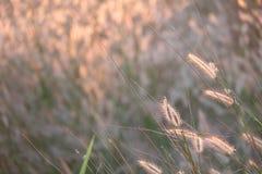 Feld des Grases während des Sonnenuntergangs Lizenzfreie Stockfotografie