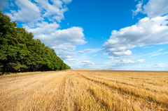 Feld des Herbstlandwirts Stockfoto