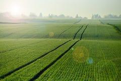 Feld des jungen Weizens stockfotos