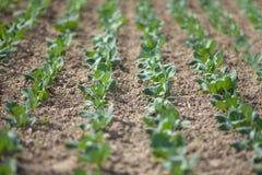 Feld des Kohls kultiviert unter Gewächshaus Lizenzfreie Stockfotografie