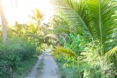 Feld des Kokosnussbaums auf Sommer in Thailand Stockfotos
