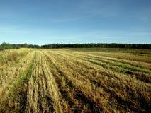 Feld des Kornes Stockbild