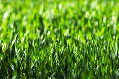 Feld des Kornes Lizenzfreies Stockbild