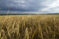 Feld des Kornes Lizenzfreies Stockfoto