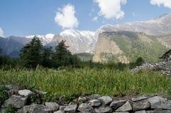 Feld des Kornes und der Berge Lizenzfreie Stockbilder