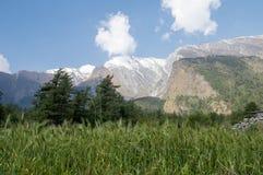 Feld des Kornes und der Berge Lizenzfreies Stockfoto