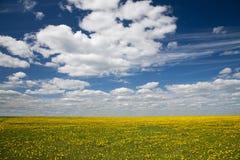 Feld des Löwenzahns und des blauen Himmels mit Wolken Stockbild