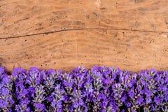 Feld des Lavendels auf einem rustikalen hölzernen Hintergrund stockfoto