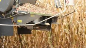 Feld des maschinellen Erntens von Mais stock video