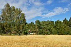 Feld des Roggens auf Rand des Dorfs Lizenzfreie Stockbilder