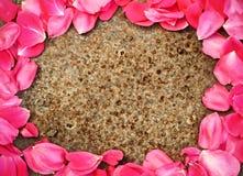Feld des rosafarbenen Blumenblattes auf Metall Stockbilder