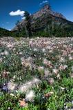 Feld des Säens der Blumen mit Berg Lizenzfreies Stockfoto