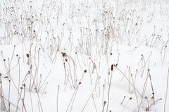 Feld des Schnees bedeckte Unkräuter Stockfoto