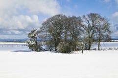 Feld des Schnees, horizontal. Stockbild