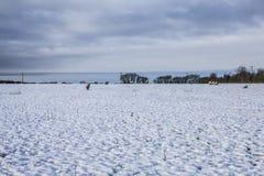 Feld des Schnees, Yorkshire, England Stockfotos