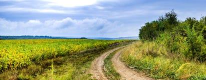 Feld des Sojabohnenöls lizenzfreie stockfotos