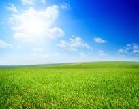 Feld des Sommergrases lizenzfreie stockfotos